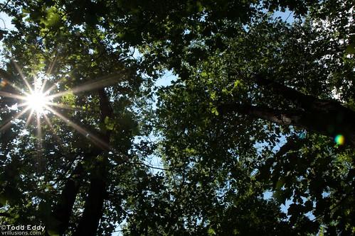 POTW: Solar (Lens) Flare