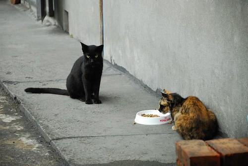 吃飯時間到了