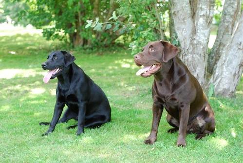Nala & Tucker