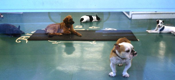 Midtown Doggie Day Care (2)