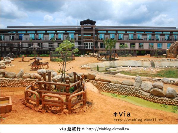 【新竹住宿】來去和動物住一晚~關西六福莊生態渡假旅館8