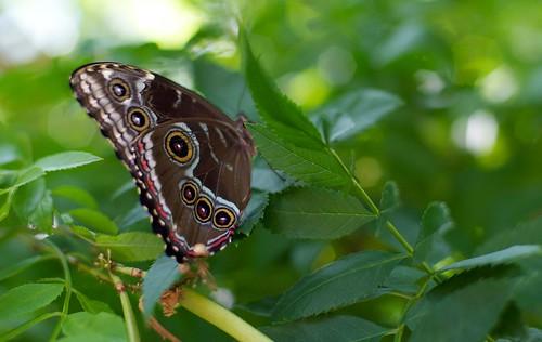 butterfly1-8-10-10