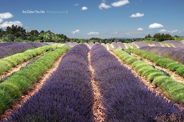 Onde Provenzali Al Profumo Di Lavanda | Postcards From Provence