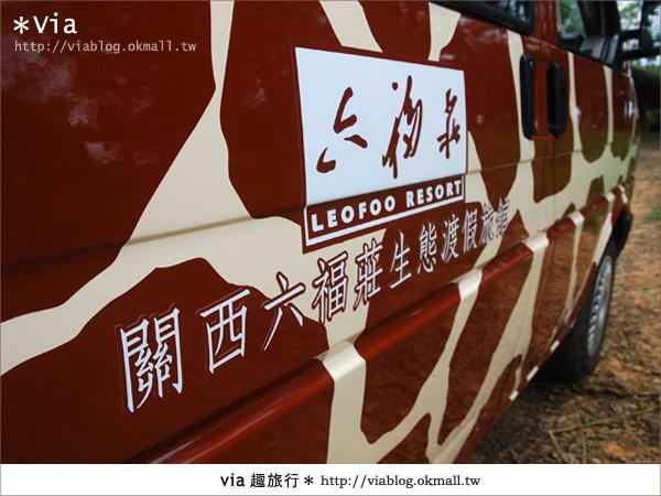 【關西六福莊】精彩秘探野生動物園/DIY手作/農趣樂~!19