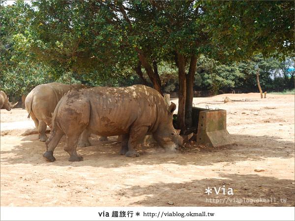 【關西六福莊】精彩秘探野生動物園/DIY手作/農趣樂~!26