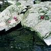 Autumn Red ([Anthony T.]) Tags: autumn usa 6x6 water leaves rock mediumformat river moss minolta maryland 120film f22 hampstead polarizer yashicad gunpowderfallsstatepark iso160 summerending 1sec fujipro160c autopole 882010 takenwithvintagecamera usedawestonmateriimeter