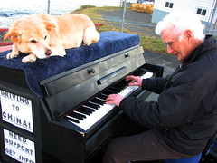 Traveling Piano Pouch Cove, Canada (TravelingPianoMan) Tags: music dog canada truck out fun outdoors friendship random unique live performing piano pickup player novelty jamming danny hanging boner traveling performers impromptu mydog jammers spontaneous synchronicity kean duets spontaneity my