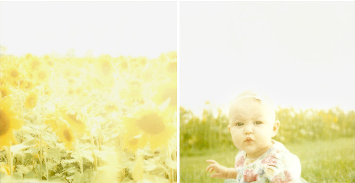 {Sunflower Polaroids}