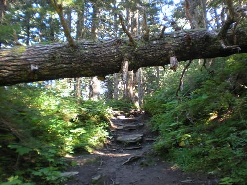Mt Robert's Trail