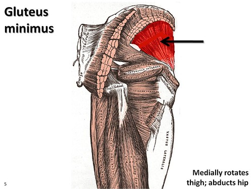 Gluteus Minimus Muscles Of The Lower Extremity Anatomy Visual