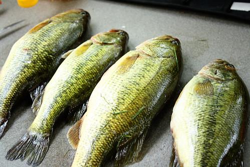 caught bass