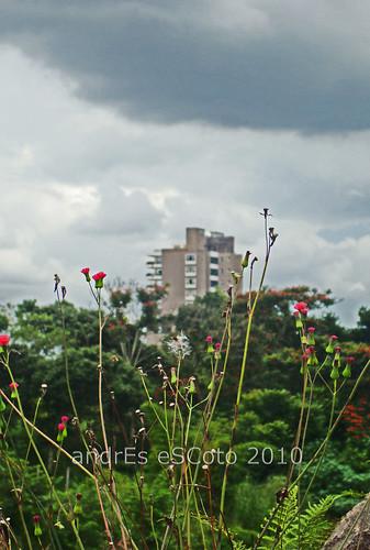 San Salvador2