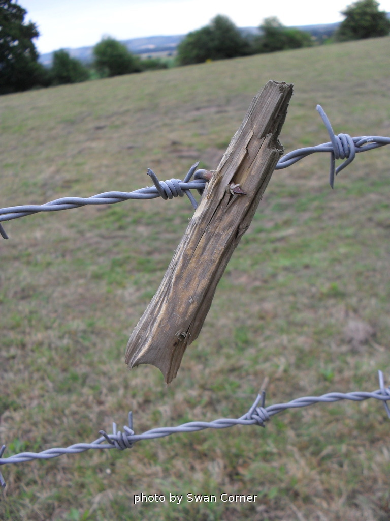 The World\'s Best Photos of fence and impaled - Flickr Hive Mind