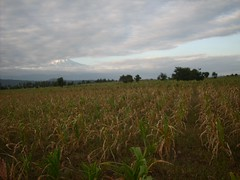 Carbon Covenant - Tanzania: Corn drying up