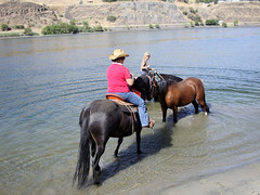 Come on in, the waters fine! (These_Eyes) Tags: blue summer horse beach water swim fun ride idaho trail western snakeriver hellsgate