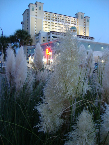 sea grass and the mini-mart
