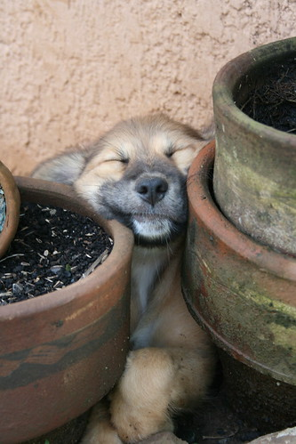 Ate sleeping in between pots