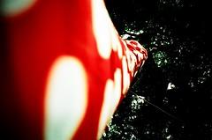 wrapped up (lomoD.xx) Tags: red white tree art japanese lomo lca xpro crossprocessed xprocess wrapped lomolca southbank lookingup material 100 agfa jessops100asaslidefilm agfaprecisa vignette 100asa polkadot artinstallation lomowall haywardgallery yayoikusama conceptualart agfaprecisa100 jessops lomodxx precisa omo precisa100 neckcreaker walkinginmymind lomodxxwall