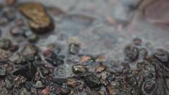 Canon 5DMII - 'Sigur Rós - Straumnes' (dinin) Tags: sea lake blur water denmark island see iceland video blurry meer wasser sweden 5d sigurrós sigurros unscharf icelandic unschärfe fullhd straumnes 5dmark2 canon5dmarkii