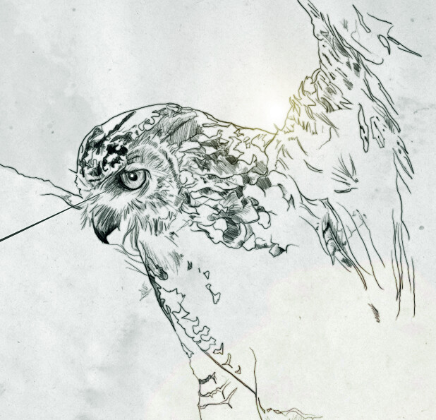4954993518 833b7fa0d7 z BIRDS & DEATHS
