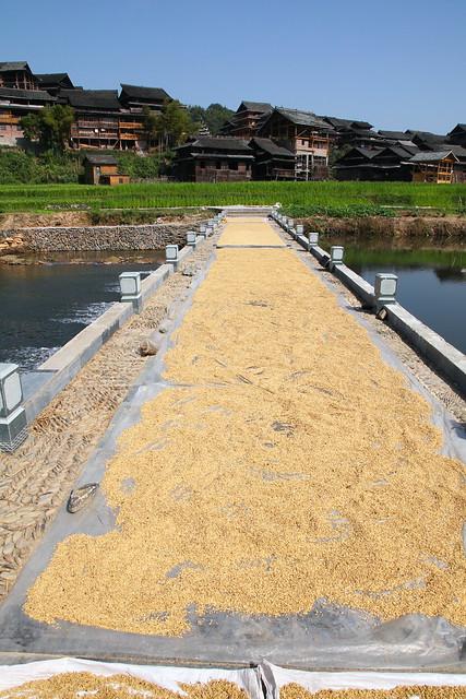 Drying rice on the bridge in Chengyang, Guangxi, China