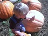 pumpkin 107
