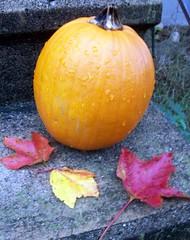 Pumpkin_10110