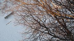 soaring below my feet (marianna_a.) Tags: city winter light urban snow canada tree bird horizontal bench landscape lumix gold quebec montreal branches flight suburbia fromabove panasonic g1 below marianna armata mariannaarmata