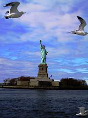 Statue of Liberty From Boat With Seagulls; New York Harbor (hogophotoNY) Tags: nyc seagulls ny newyork sol ferry liberty statueofliberty bigapple libertyisland ladyliberty thebigapple newyorkharbor filmphotography hogo hogophoto newyorkcityicon