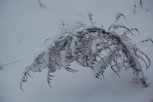 snow jan 09 011
