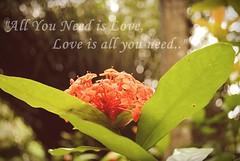 Love, love, love. (Kessia Moraes) Tags: beatles valentines