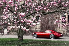 Wiesmann MF4 GT (Keno Zache) Tags: auto castle car canon photography eos photoshoot gt schloss sportcar wiesmann keno sportwagen bckeburg mf4 400d zache