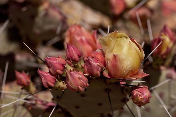 Cactus Blossom Bouquet