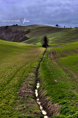 Colline senesi^2 (.anselmo) Tags: italy tree green field grass vineyard spring holidays farm dunes country hill campagna pasture tuscany crete siena toscana hired amsis agriturism