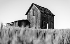 Passage of Time (Chris Lakoduk) Tags: old building home homestead blackandwhite contrast bokeh shallow depth field 50mm landscape ruins time passage hard wooden rough derelict abandoned ethereal