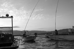 (fernando.barcia) Tags: fene ferrol barallobre ferrolterra galiza galicia blancoynegro reportaxe mariscadores mariscadoras leica metropolis underground