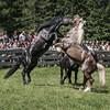 wild_at_heart (marke59) Tags: austria 2017 fif marke59 fotowalk österreich pferde horse horses salzburg rauris hengstauftrieb inspired by love