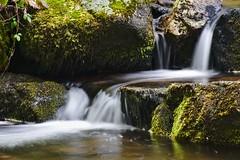 Eau filante ! (Marc ALMECIJA) Tags: eau water pose long longue exposure exposition vert green river rivière pierre mousse sony rx10