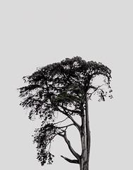 Tree (__will) Tags: california sanfrancisco vacation tree nature minimal minimalist minimalism