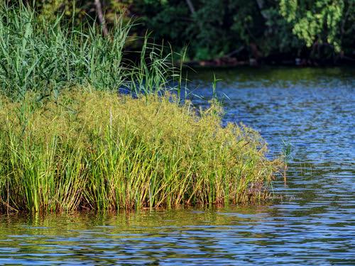 Svir River 31 ©  Alexxx Malev