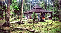 https://foursquare.com/v/taman-botani-negara-shah-alam/4de8f511d4c0faa5643bdd4a #holidays #travel #garden #green #nature #Asian #Malaysia #selangor #shahalam #度假 #旅行 #大自然 #绿色 #公园 #亚洲 #马来西亚 #雪兰莪 #沙阿南
