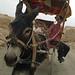 Donkey cart at Gaochang