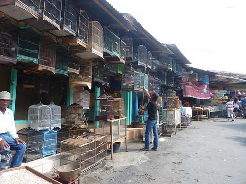 Java-Malang (14)