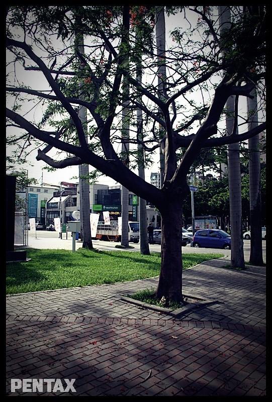 台中美術綠園道隨手拍