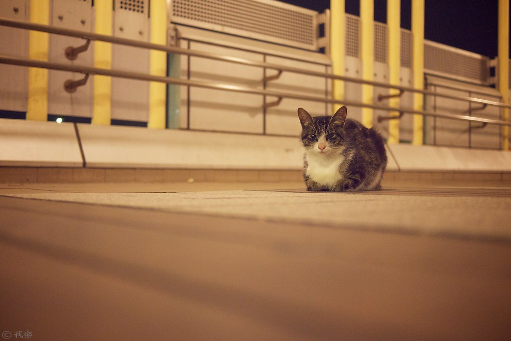 Cat in midnight #2