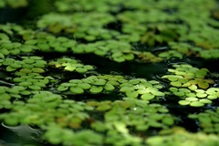 Seek (neelgolapi) Tags: green canon bbg brooklynbotanicgarden canon70200mmf40l nonewpic matthew77 aquatichouse