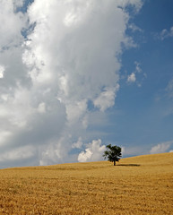Lonely tree lost in a sea of corn and a land of clouds - Albero solitario perso in un mare di grano e in una terra di nuvole (Robyn Hooz) Tags: sky italy tree ex clouds canon corn italia nuvole sigma emilia cielo bologna lonely toscana polarizer albero 1020 solitario appennino grano pistoia polarizzatore hsm 550d mywinners toscoemiliano gaggiomontano