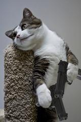 062710 (AgentThirteen) Tags: cat kitten gun kitty pistol 365 johnwoo 9mm beretta catswithguns badasscats catsabouttobustacap