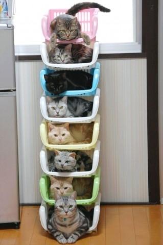 收納貓咪4