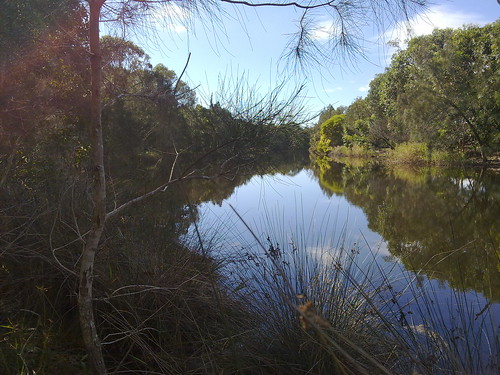 Stumers Creek, Coolum